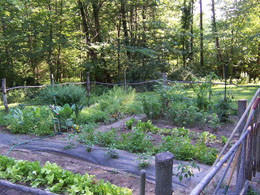 Jim Kunstler's garden july 08