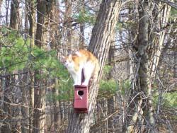 jim kunstler's cat Scooter