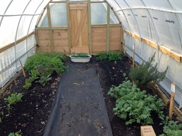 Hoop house Inside Oct 2013
