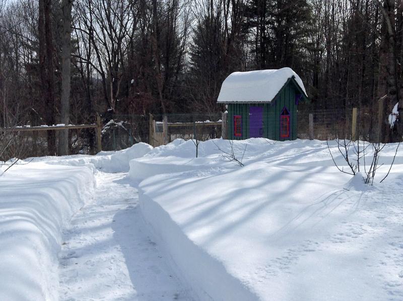 Chickhse Snow_Feb24