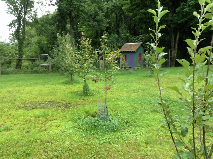 Orchard Aug 2014