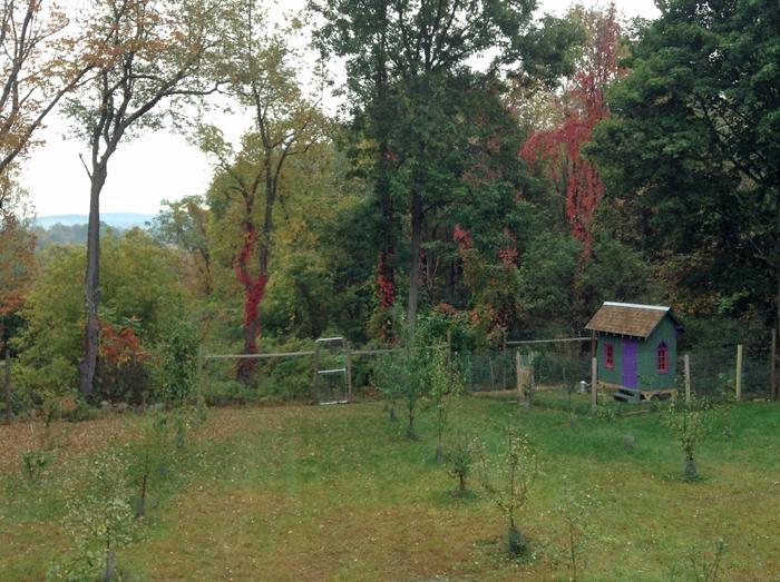 Orchard fall